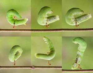 pelajaran dari semut